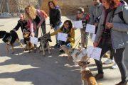 mascotas-ocho-balea-travel