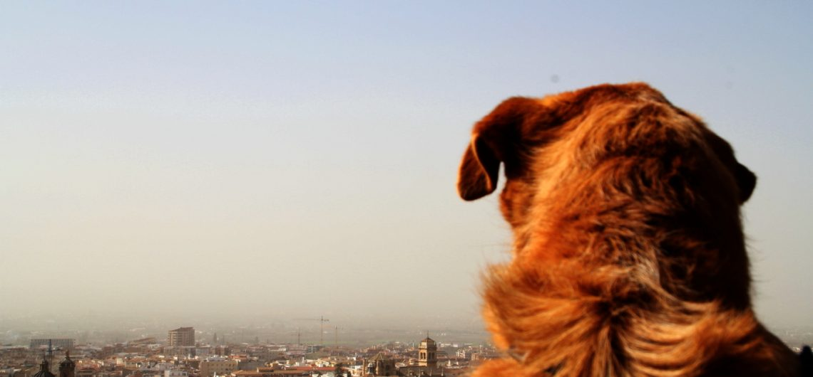 Visita_guiada_GR_perros0108_2