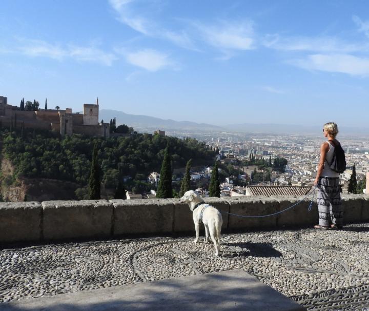 paseo con perro en granada
