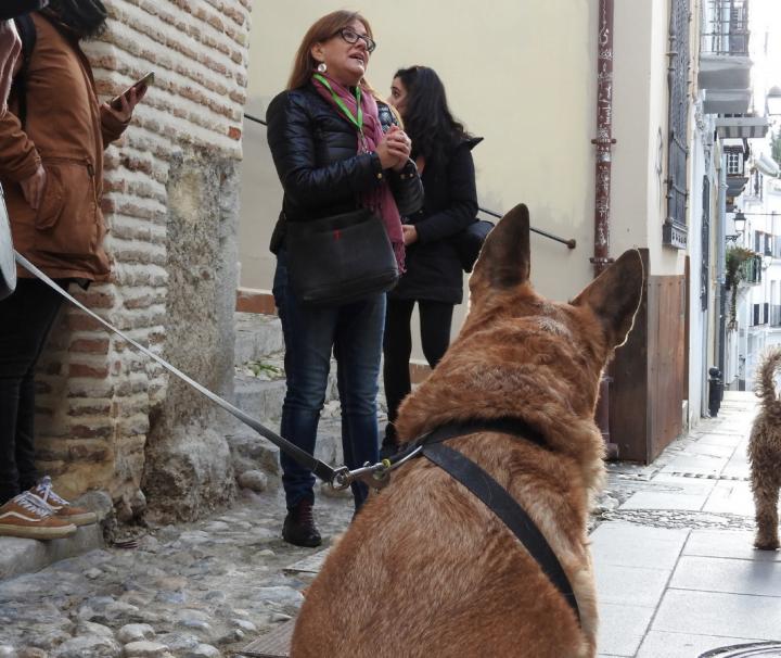 Visita guiada realejo con perros